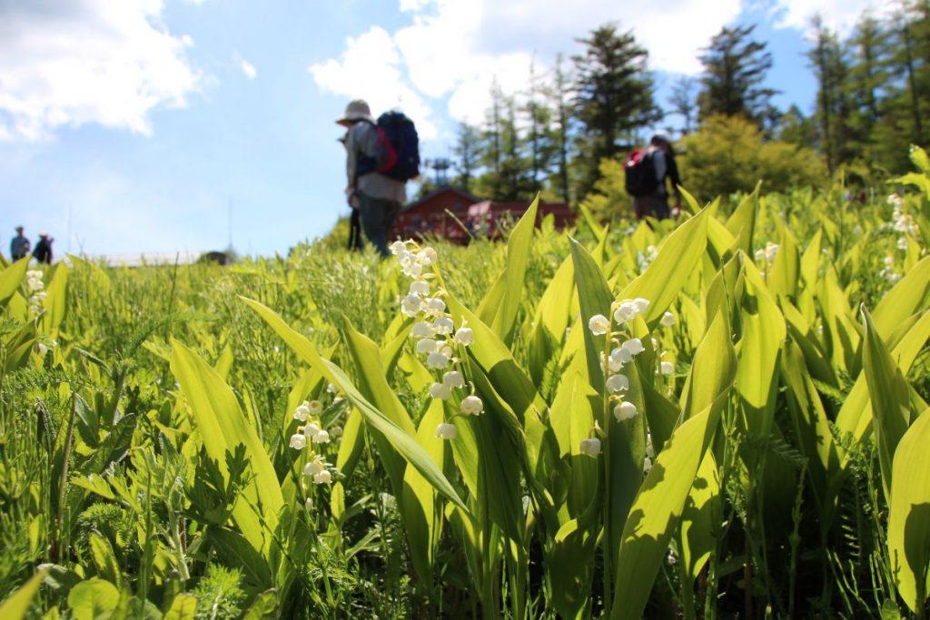 緑の旅人と歩く 初夏到来!花の宝庫・入笠山を訪れる 2日間