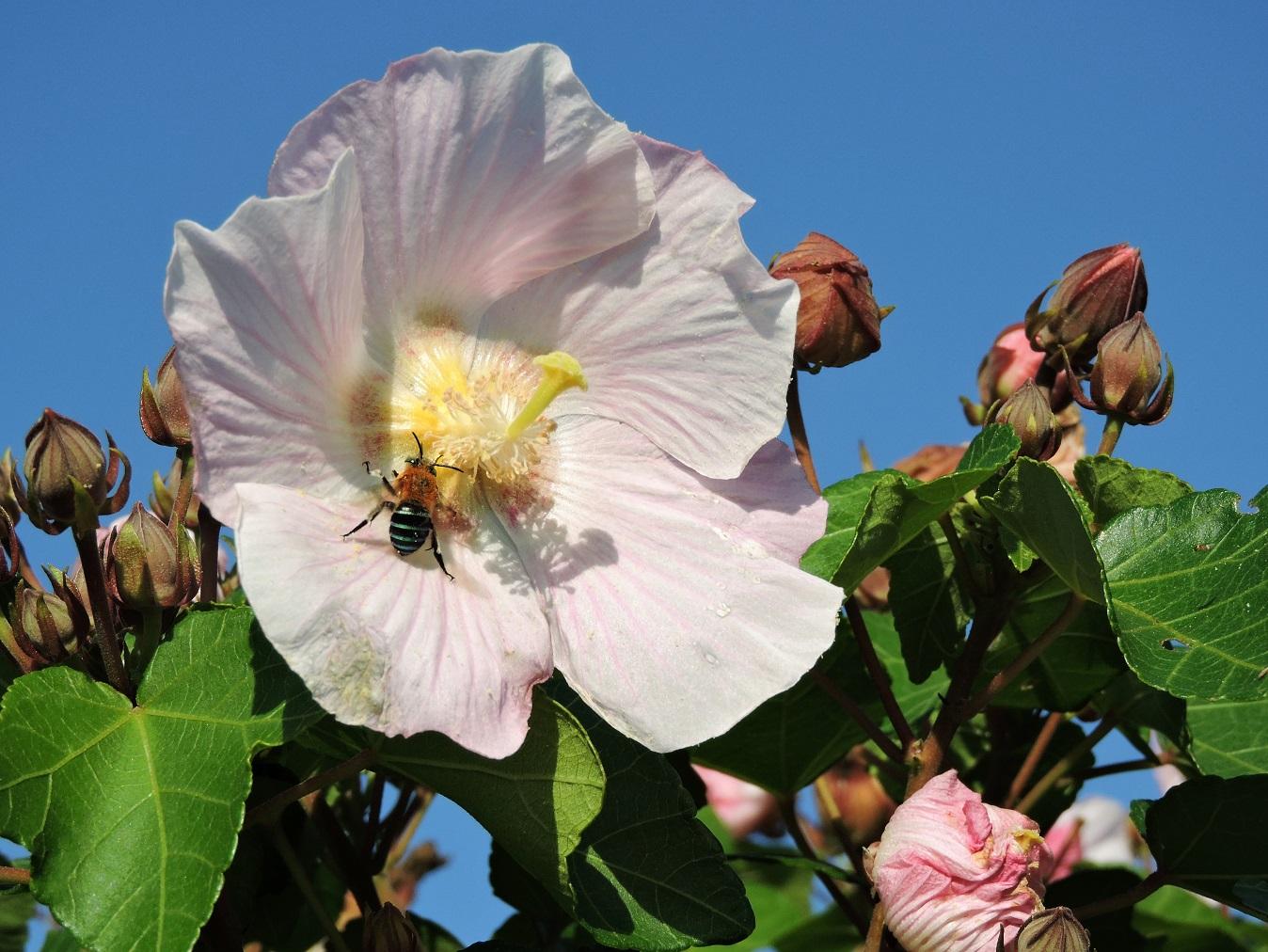【花の観察会】石垣島 琉球の花々 3日間