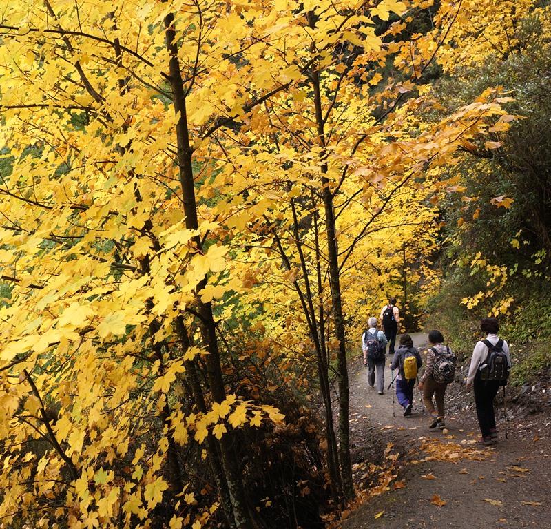 秋色に染まる森を歩く(5日目)