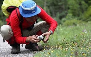 カメラは可憐な高山植物の写真でいっぱいに
