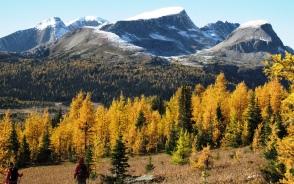 秋にはカラマツの黄葉が素晴らしい