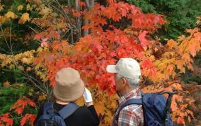 カラフルに色づくメープルの森