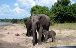 ゾウの母子