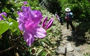 春には登山道にツツジが彩りを添えます
