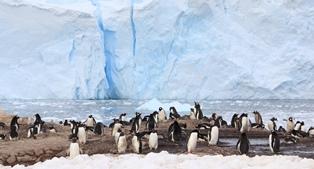 ゼンツーペンギンの営巣地を訪れる