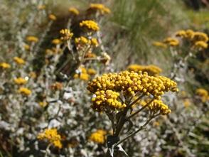 登山道わきに自生する植物