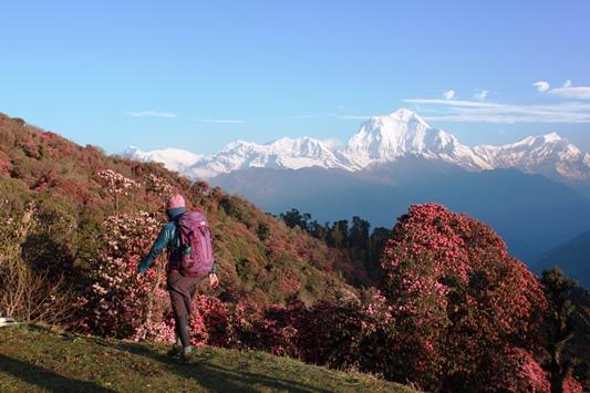 ダウラギリI峰を眺めながらゴラパニ峠へ(トレッキング3日目)