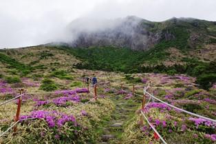 漢拏山の南壁が迫る南麓を下ります(2日目)