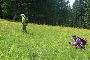 豊富な高山植物を見ながらハイキング(3~4日目)