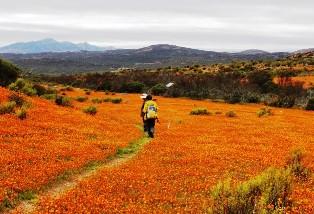 花畑につけられたトレイルをハイキング