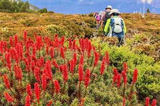 タスマニア島の花々を見ながら歩く(6日目)