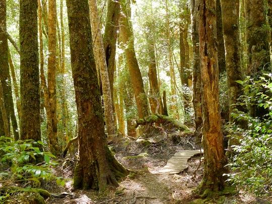 国立公園にある最古の森