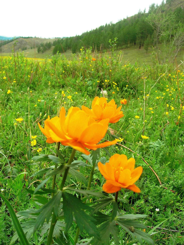 トレッキング中に出会った色とりどりの花々