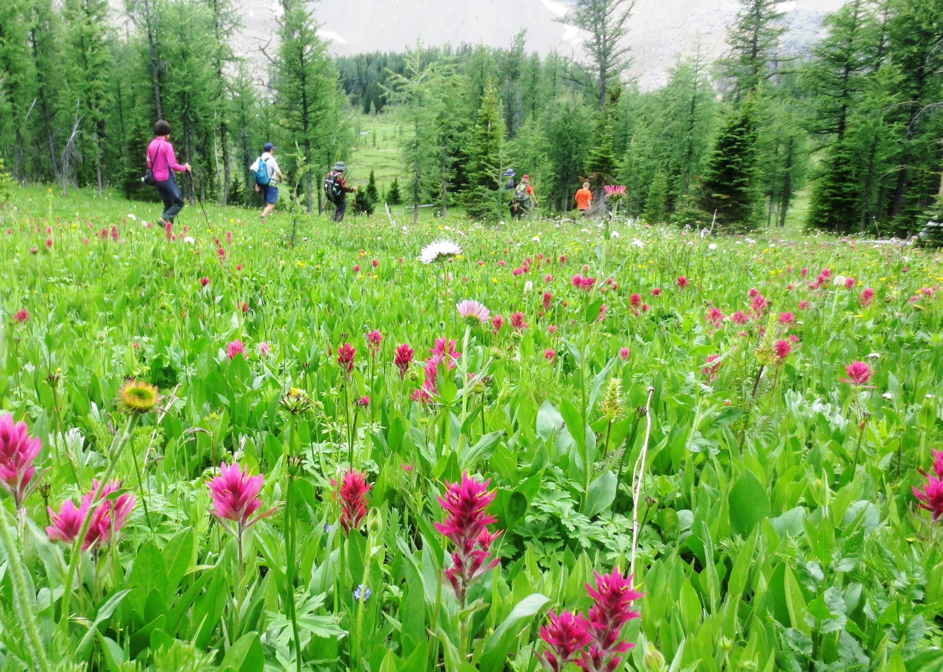 トレイルを外れてお花畑を歩けるのも魅力