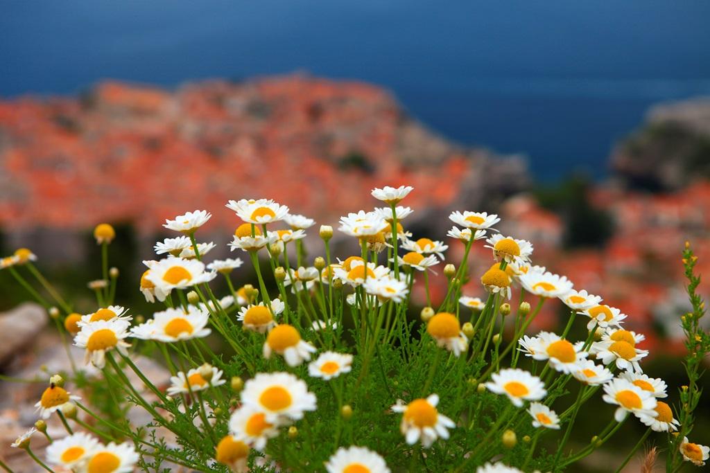 花咲く春のスルジ山