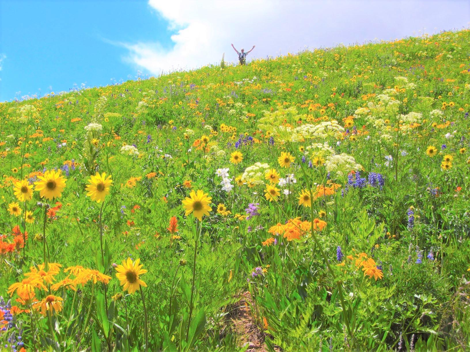 足の踏み場もないほどのワイルドフラワーが咲いたクレステッドビュートのトレイル