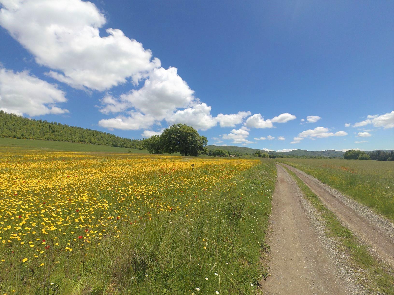 春の花咲くトレイル
