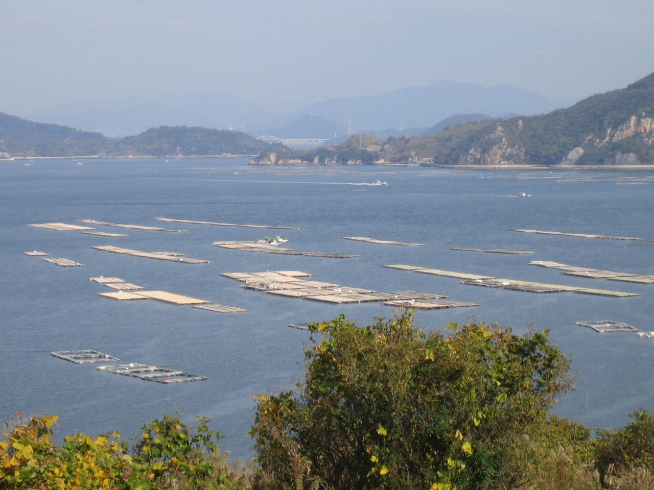 江田島に浮かぶ牡蠣筏、牡蠣の浄水機能も近年、注目を集めている