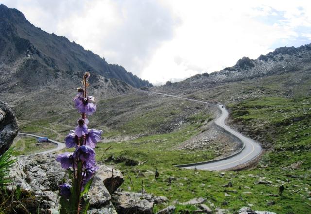 ブルーポピー咲く巴郎山峠(4,320m)