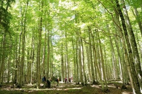 世界遺産オルデサ渓谷のブナ林をいく