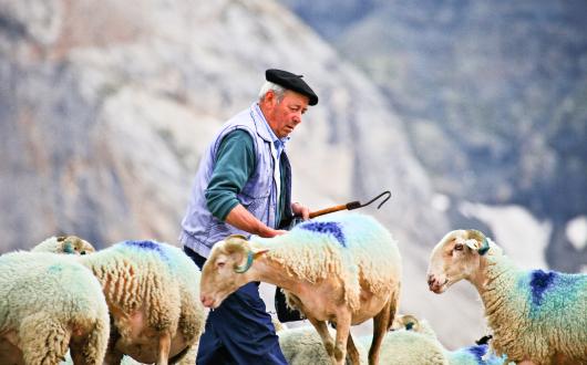 昔ながらの放牧生活をするピレネーの人々