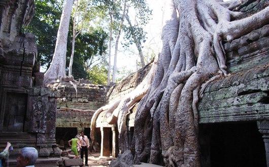 ガジュマルの樹根に覆われたタ・プローム遺跡