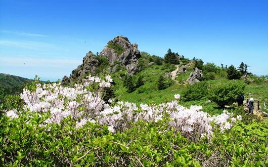 ツツジやシャクナゲ咲く智異山の春