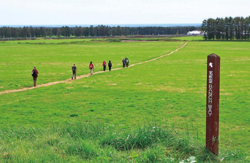 青々とした牧草地の中のトレイル(10月上旬)