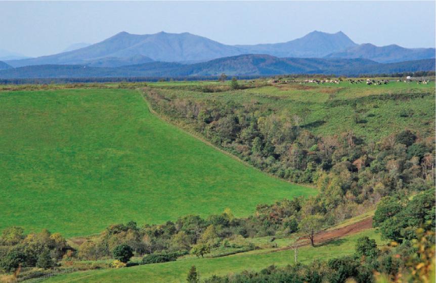 展望の良い広々とした酪農地帯をゆく(10月上旬)