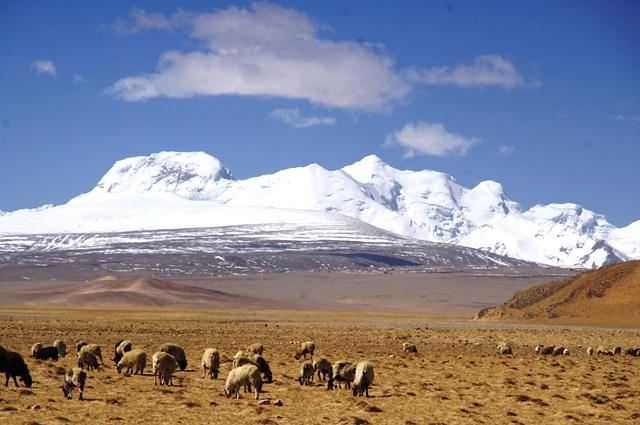 赤茶けたチベットの大地と白い輝く山々