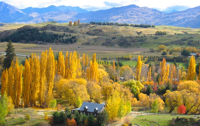 4月のニュージーランドは木々が黄金色に染まり美しく輝き出す(アロータウン周辺にて)
