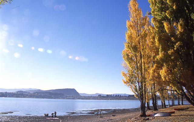 ポプラの黄葉と湖の美しい風景が広がるワナカ