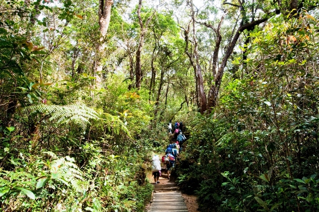 初めはうっそうとした熱帯雨林のジャングルを行く