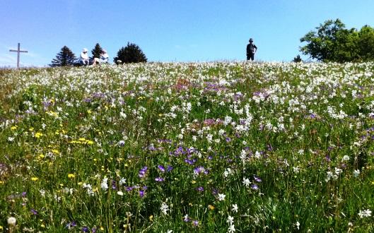 ナルシキンポウゲ、タンポポなどの花咲く丘を下る