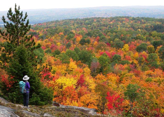 展望台から眺めるアルゴンキンの森。色鮮やかな紅葉がどこまでも続く