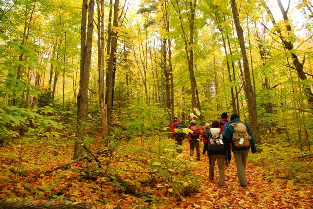 アルゴンキンの森で紅葉ハイキング