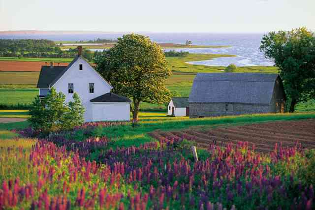 名作の舞台そのままの美しい田園風景が広がるプリンスエドワード島を歩く  写真提供:Tourism PEI/John Sylvester