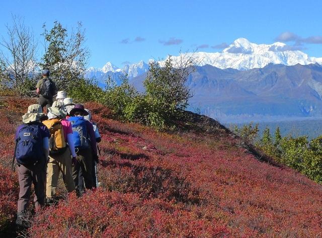 じゅうたんのように広がる草紅葉の中、デナリやアラスカの山々を見ながら歩く