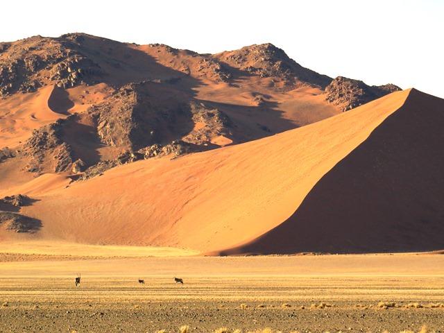 ナミブ砂漠に暮らすオリックス