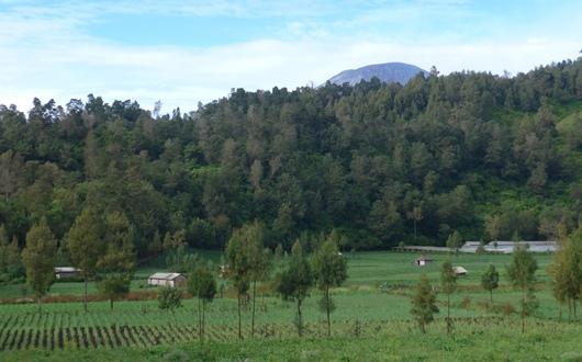 のどかなラヌパニ村からスメル山を遠望