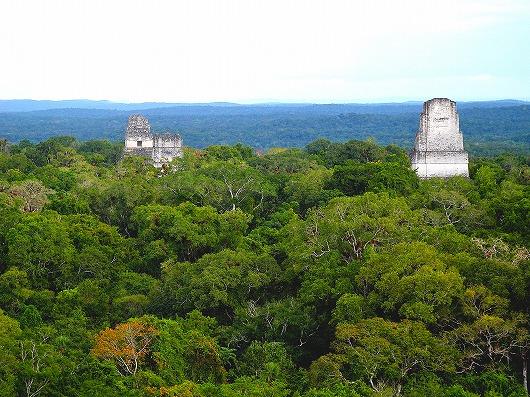 ティカル遺跡Ⅳ号神殿からの展望、左よりⅠ号神殿、Ⅱ号神殿、Ⅲ号神殿(右)