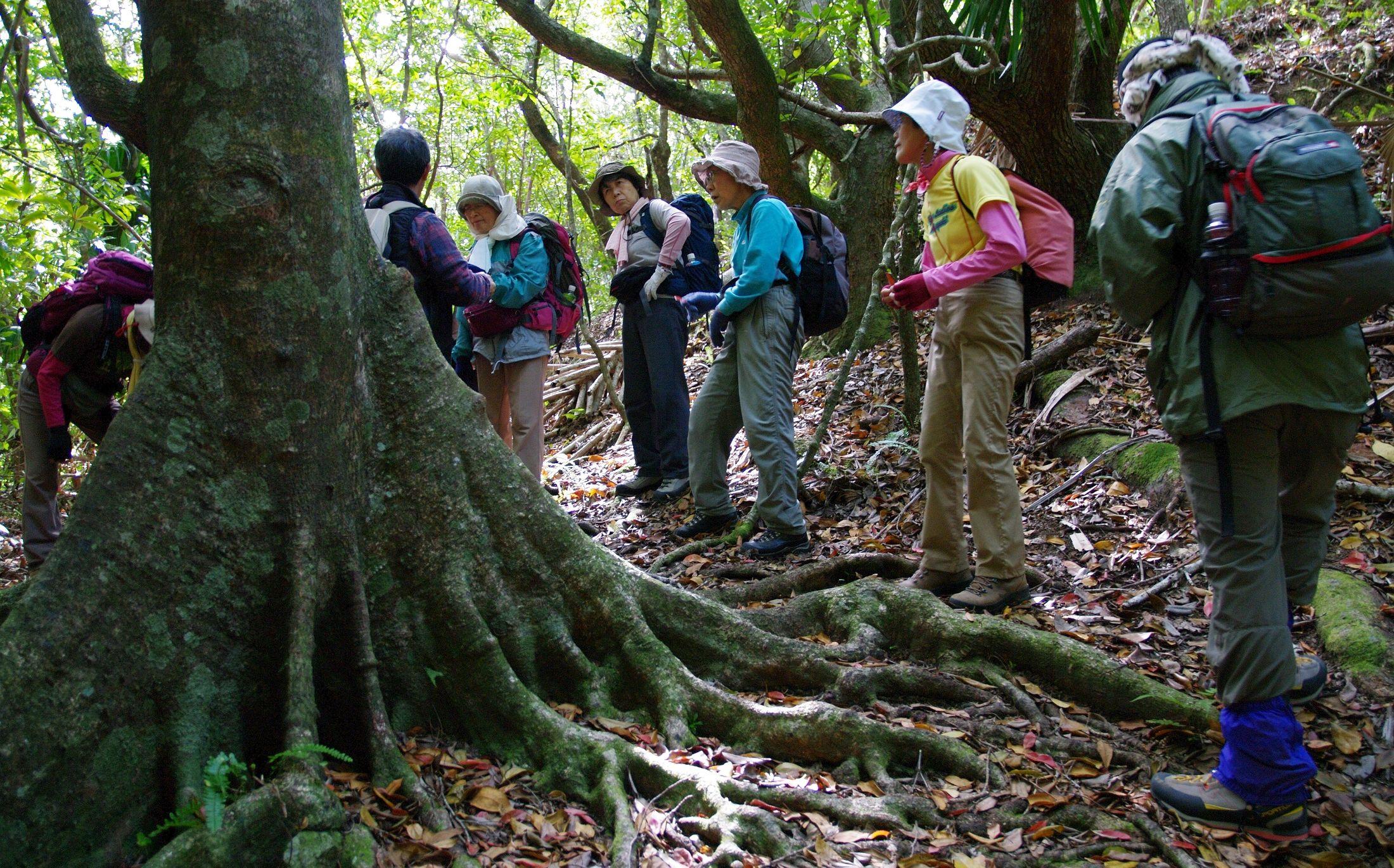 ジャングルの中、現地ガイドの詳しい解説を聞きながら歩きます