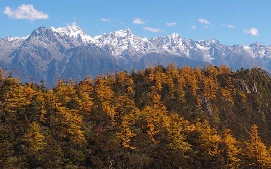 黄葉に彩られたナゾヤ峠付近から白茫雪山(5,640m)を望む