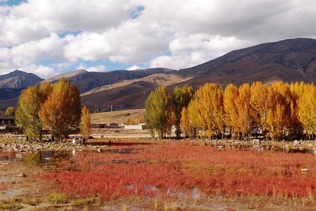 美しいポプラ並木が続く稲城(ダオチェン)周辺