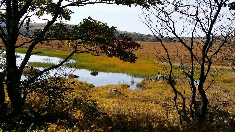 草紅葉が美しい八島ヶ原湿原