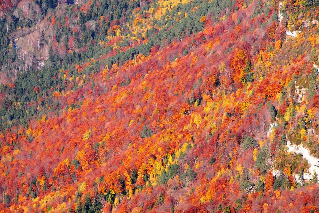 真っ赤に染まるオルデサ渓谷のブナの森