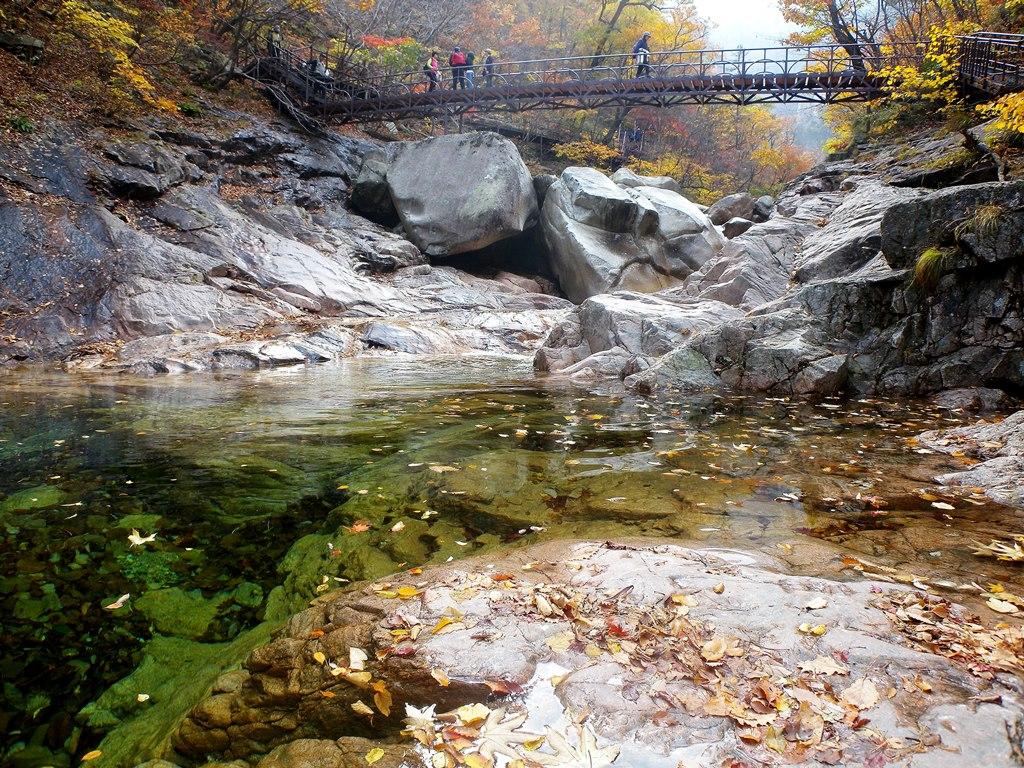 美しい清流と水面に浮かぶ紅葉