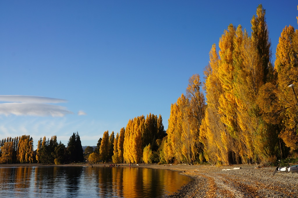 ポプラ並木が続くワナカ湖畔(5日目)