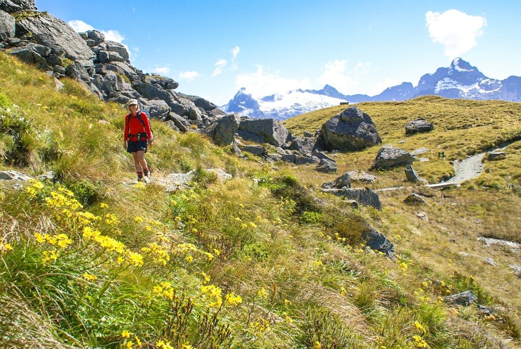 ハリス峠を越えたところに咲く高山植物(4日目)
