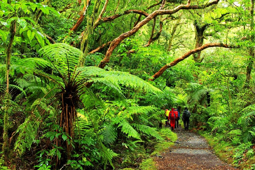 美しいフィヨルドランドの原生林はNZを代表する景観です(3日目)